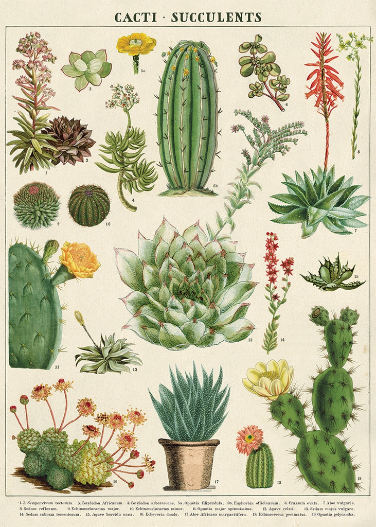 Cacti and Succulents Poster/Wrap
