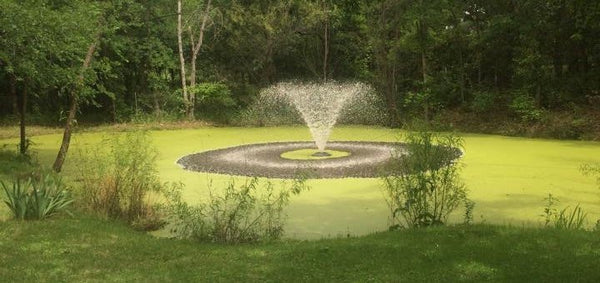 Dealing With Duckweed In Your Pond Loch Ness Water Gardens