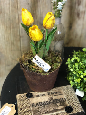 Yellow Tulip in Cinnamon Covered Pot