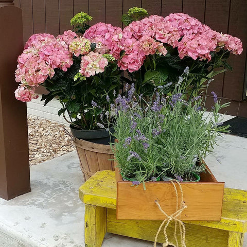 Front Porch bushel basket yellow wood stool pink hydrangeas lavender
