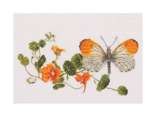 Butterfly Nasturtium cross-stitch