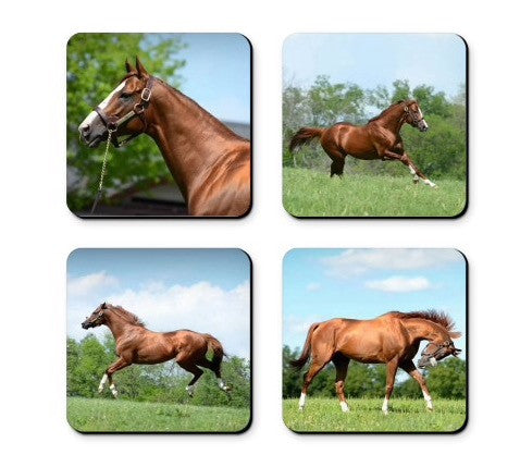 CC2 California Chrome Coaster Set