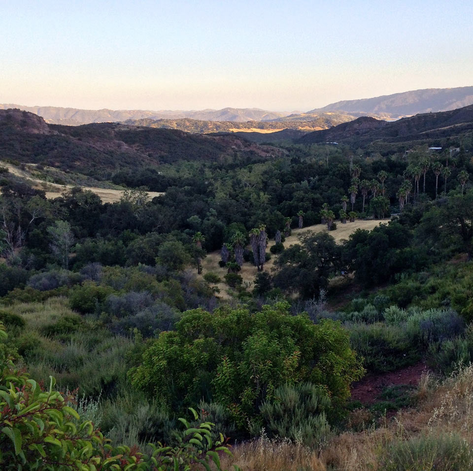 The Sacred Wild: Ojai Healing Group