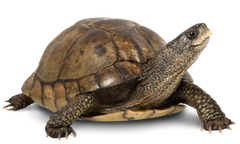 Caring For Your Turtle Pets Domain