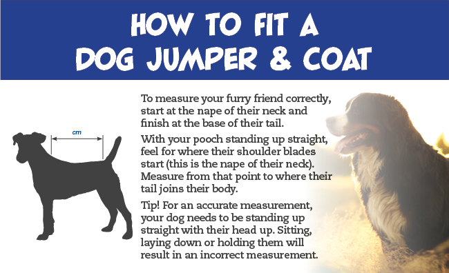 how to fit a dog jumper