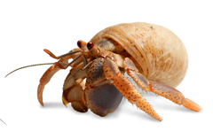 caring for your hermit crab pets domain