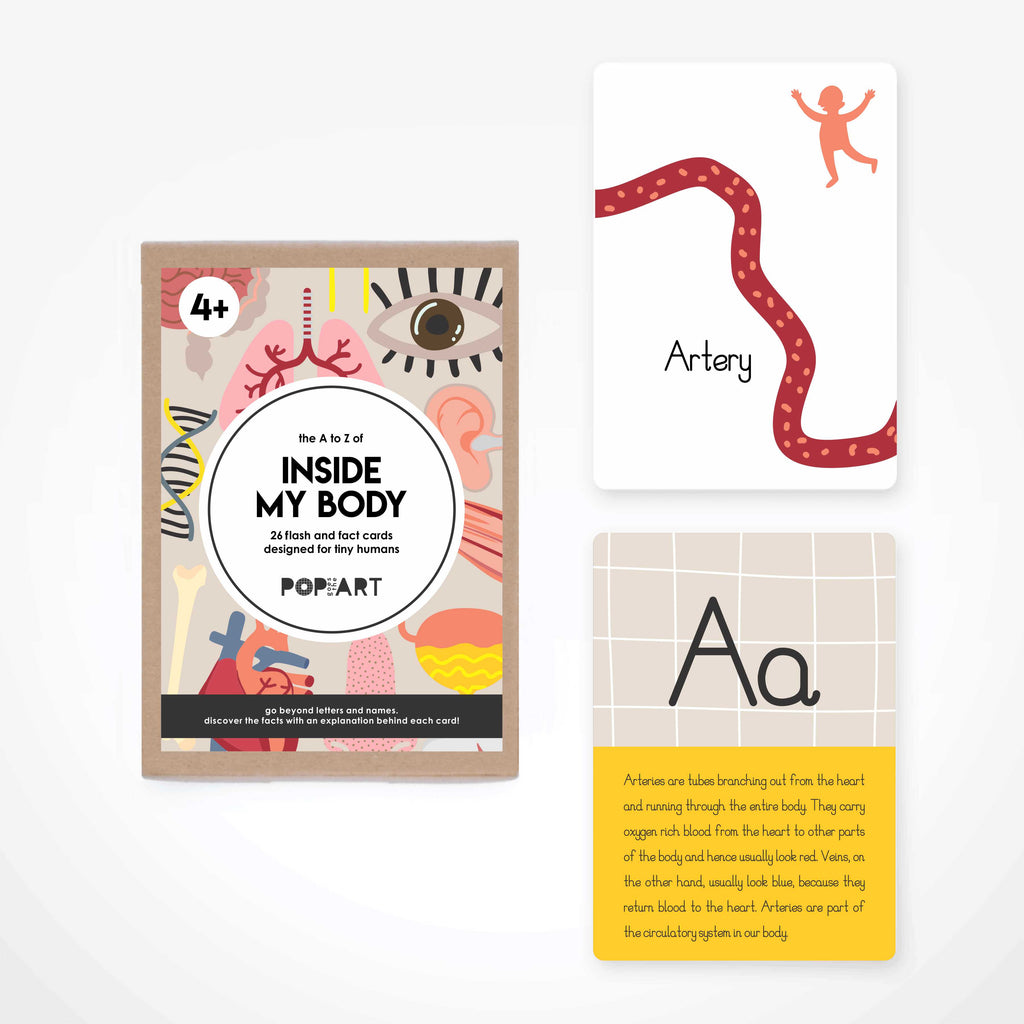 Flash & Fact Cards | Inside My Body