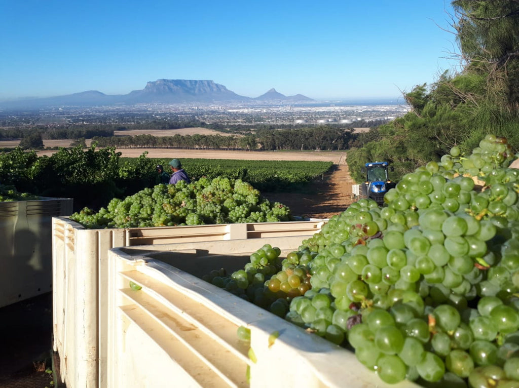 De Grendel Harvest 2019 Q&A with Charles Hopkins