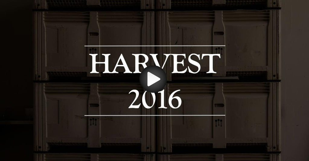 VIDEO: Harvest 2016 - Episode 1