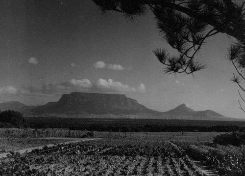 View of Table Mountain from De Grendel
