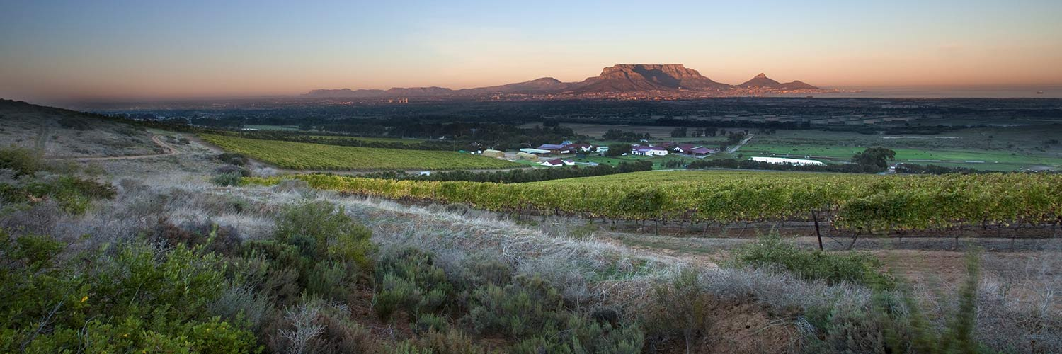 De Grendel Wines Cape Town South Africa