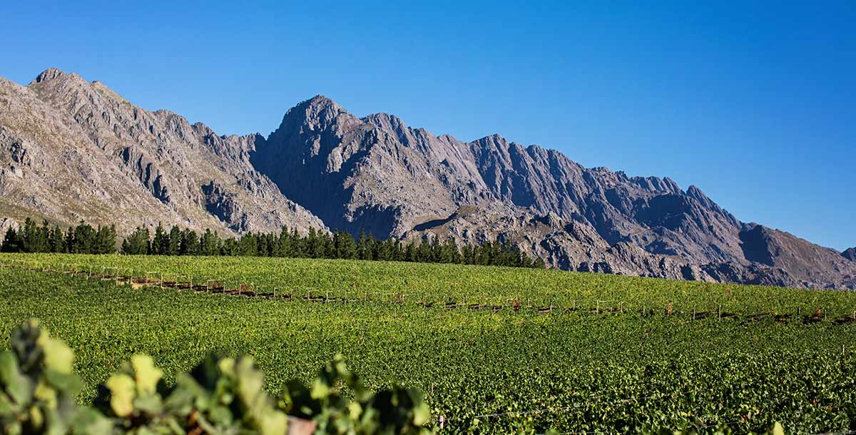 De Grendel Wines Witzenberg Mountains Ceres