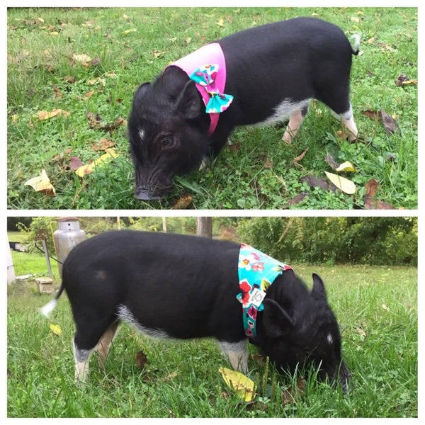 Poppies & Posies Reversible Bow Bandana - Snort Life  - 2