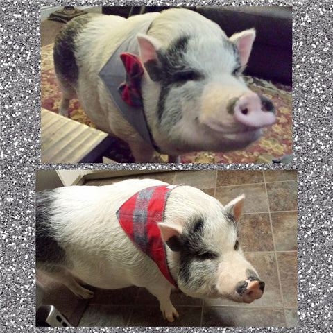 Red Plaid Reversible Bow Tie Bandana - Snort Life, Mini Pig Clothes