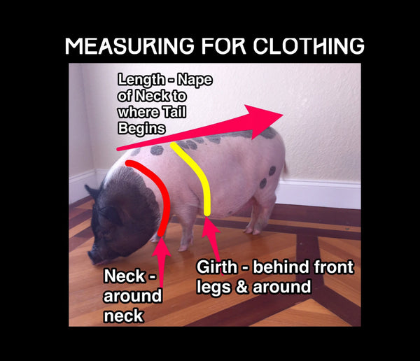 What Happens In VEGAS Neck Tie Collar Set - Snort Life, Mini Pig Clothes