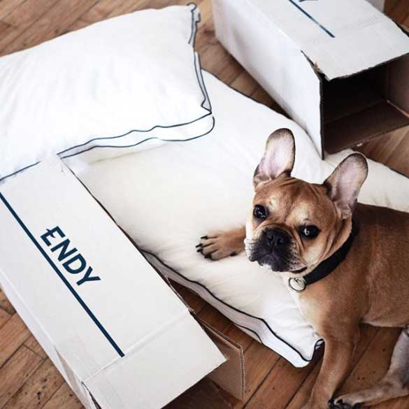 French bulldog next to two Endy Pillows and boxes.