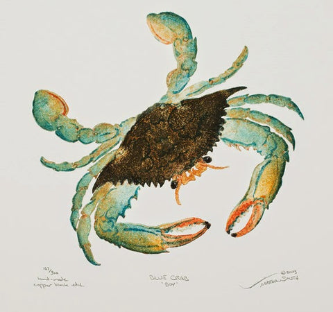 Blue Crab 'Boy' - Crab