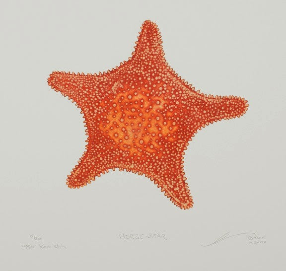Horse Star - Starfish