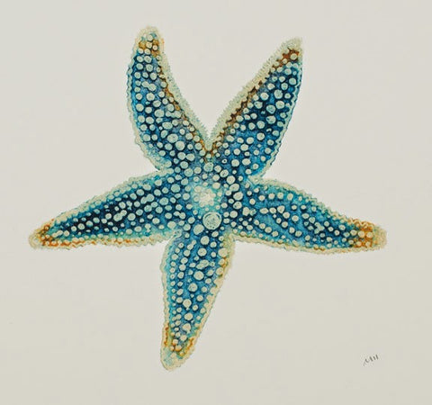 Blue Star - Blue Starfish