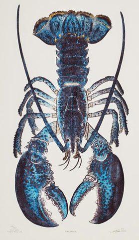 Reliance - Blue Lobster