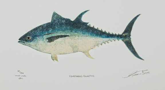 Northern Bluefin - Tuna