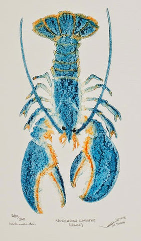 Northern Blue Lobster