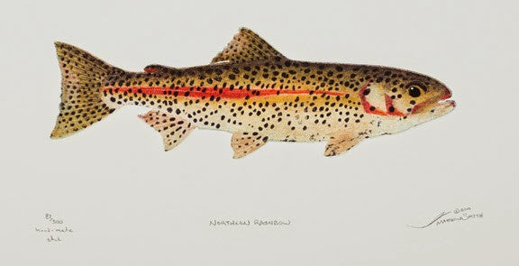 Northern Rainbow - Trout