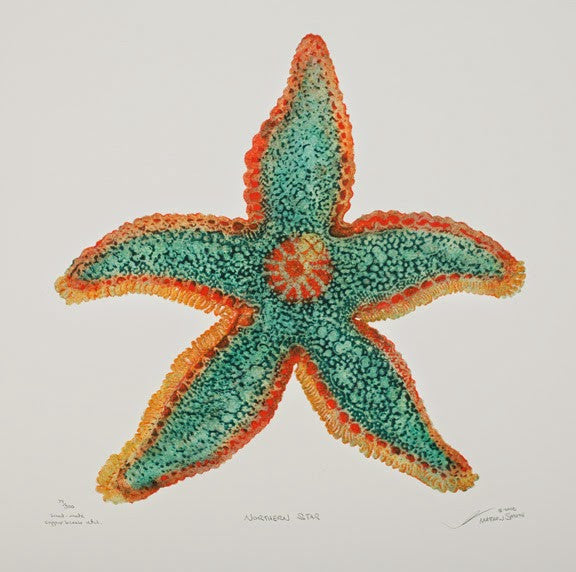 Northern Star - Starfish