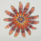 Northern Sun Star - Starfish