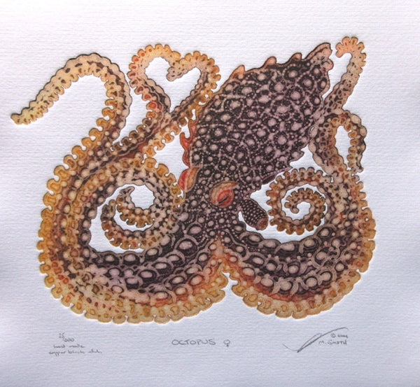 Octopus - Female