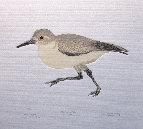 Sanderling (Winter)