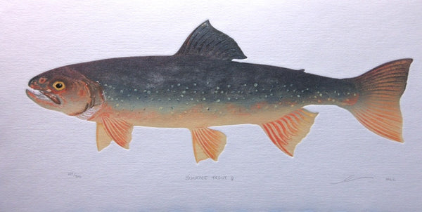 Sunapee Trout - Female