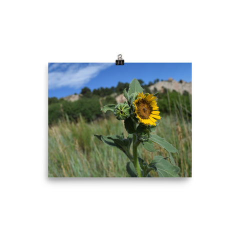Garden of the Gods Sunflower poster