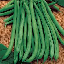 Blue Lake 274 - Bush Bean