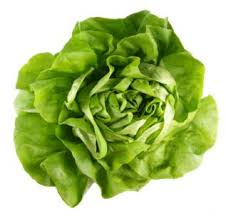 Buttercrunch -  Head Lettuce