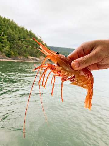 ALL YOU NEED TO KNOW ABOUT WILD-CAUGHT BC SPOT PRAWNS