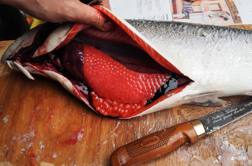 HOW TO GET SALMON ROE FROM THE FISH INTO YOUR STOMACH