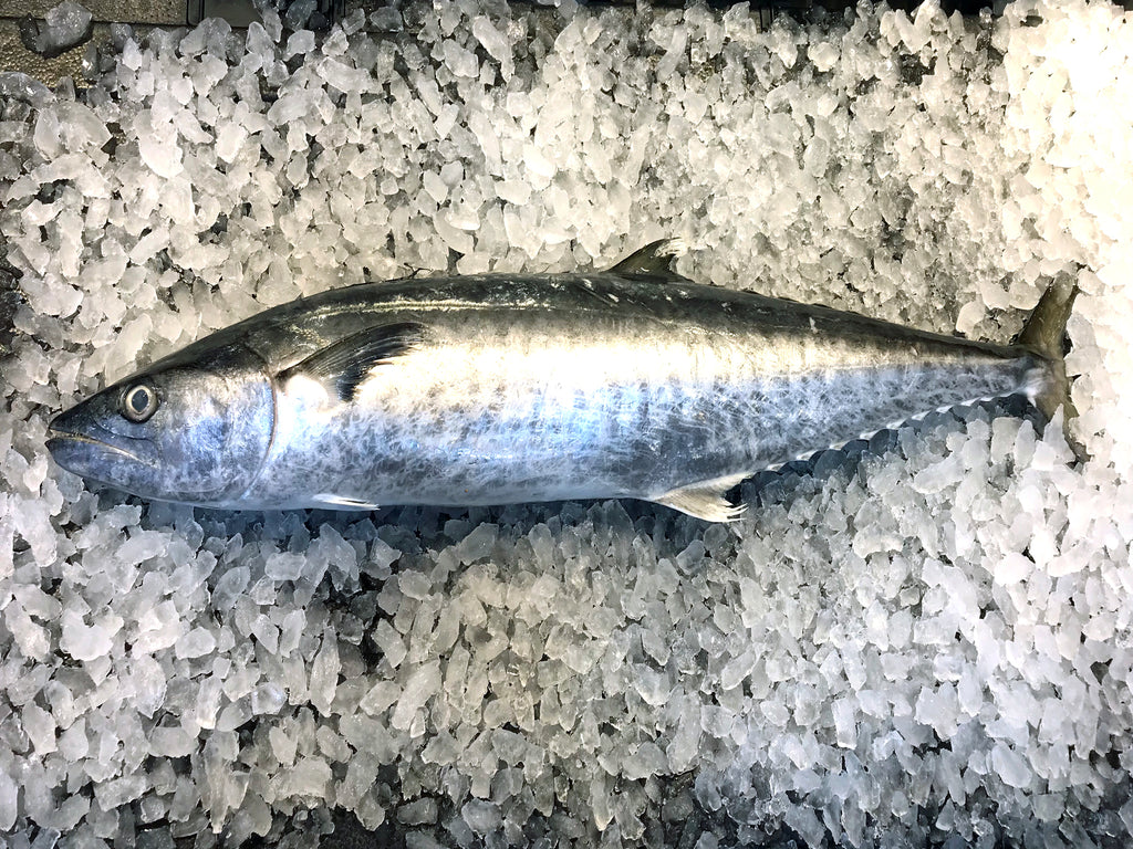 Wild caught in Indonesia. You will get the head and bones along with the portion cuts when you buy the whole fish.  Mandarin Name: 巴当鱼 Local Malay Name: Ikan Tenggiri Batang  child cut 巴当 马鲛鱼 送货 网购 新加坡 巴刹 卖鱼 新鲜 好吃