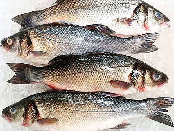 Bronzino Scottish Seabass Fresh Fish Third Generation Fishmonger