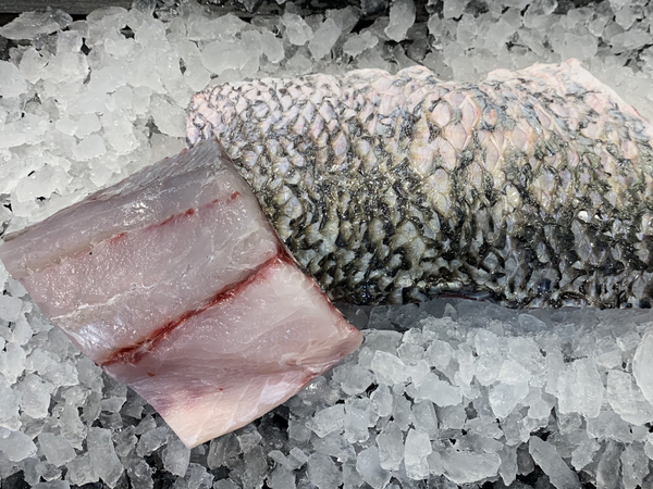 St. John's Sea Bass / Barramundi Fillet (about 500g) - Dishthefish