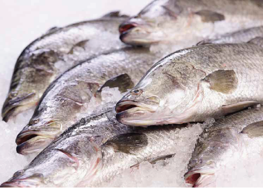 Dishthefish The New Age Fishmonger Wild Caught Seafood Fresh Fish Third Generation Fishmonger We Can Cut Your Fish Customize Fresh Fish Fresh Seafood Singapore Kuhlbarra Singapore Local Water Farm Sea Farmed Seabass Barramundi