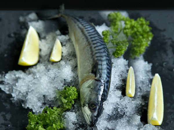 wild caught saba mackerel 洒吧鱼 fresh fish third generation fishmonger singapore dishthefish