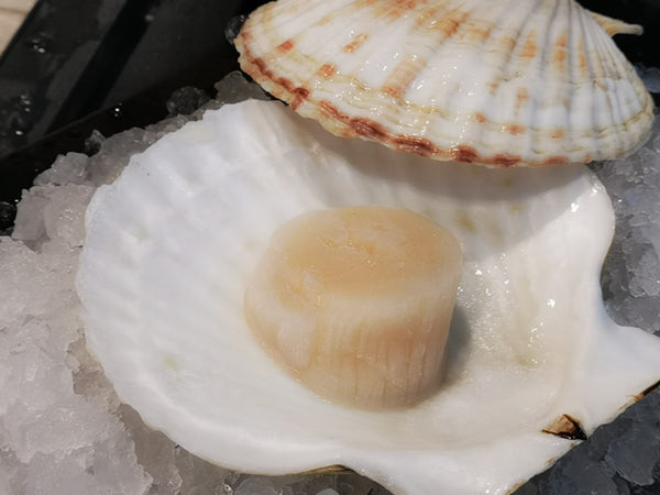 Dishthefish the new age fishmonger wet market fresh fish seafood online delivery wild caught hokkaido scallop half shell import airflow sashimi grade 刺身 扇贝 网购 新加坡 送货 巴刹 渔民 清蒸