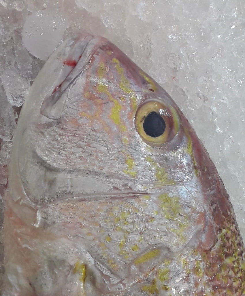 Dishthefish The New Age Fishmonger Red emperor golden mangrove snapper fresh fish seafood online delivery wild caught sustainable farmed wet market children slice fish slices head 鱼头 红鸡 红狮子 红皂 咖喱鱼头 咖喱 鱼头汤 海鲜汤 巴刹 网购 送货 新加坡
