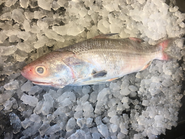 wild caught balai threadfin 午鱼 fresh fish third generation fishmonger singapore dishthefish fresh seafood supplier singapore