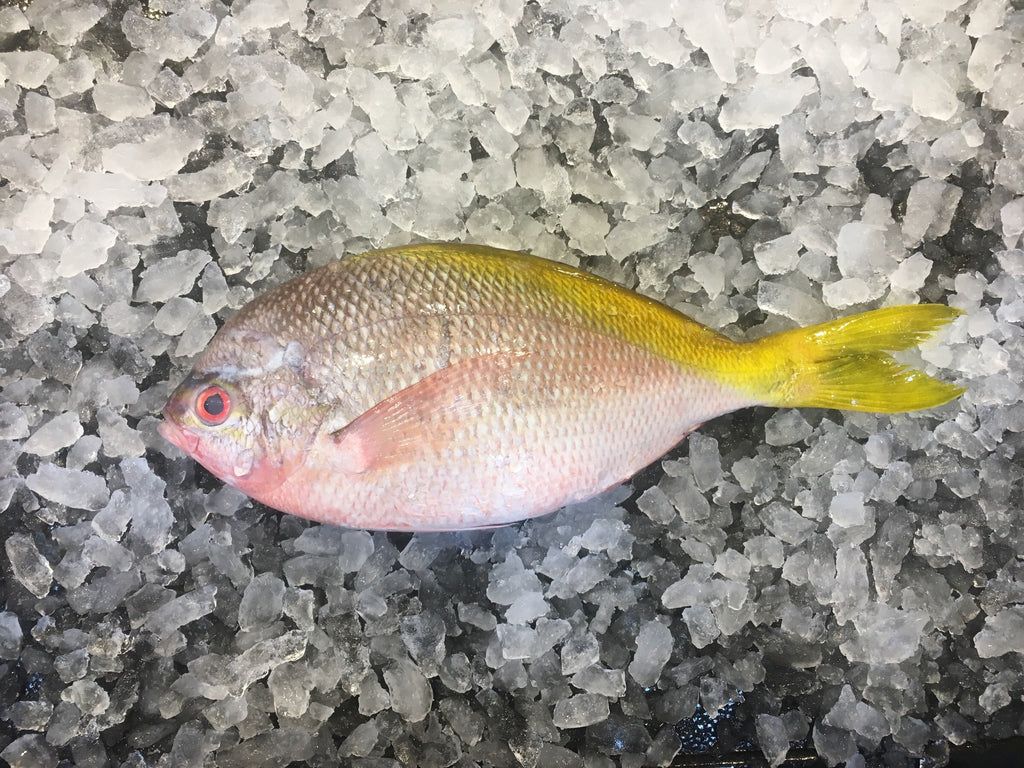 dishthefish wild caught potato fish yellowtail 番薯鱼 fresh fish third generation fishmonger singapore dishthefish fresh seafood supplier singapore