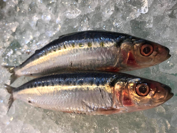 sardines wild fish singapore fish dishthefish fresh fish seafood online delivery wild caught omega 3 high nutrition fatty fish pan sear fry grill bake wet market tiong bahru the new age fishmonger sustainable responsible harvest no chemical 新加坡 沙丁魚 野生 海抓 巴剎 送貨 网购 高蛋白质 有营养