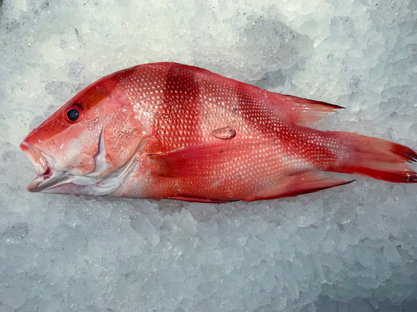 fresh chilled whole red emperor snapper gutted child cut online delivery singapore fishmonger fresh fish seafood online market delivery dishthefish the new age fishmonger