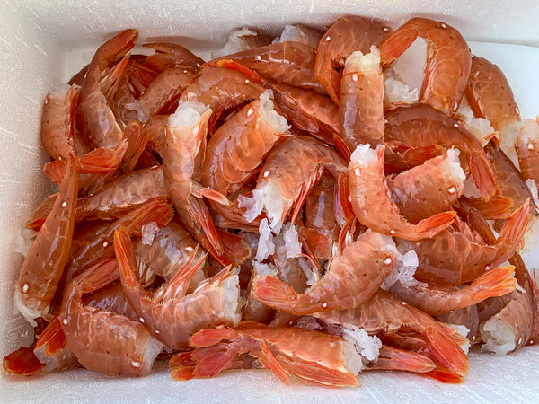 dishthefish oceanwise sustainable wild bc spot prawns sustainable dishthefish