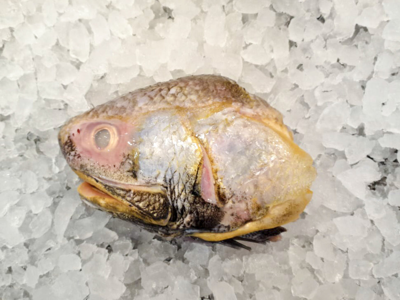 wild caught balai threadfin head dishthefish the new age fishmonger market online delivery fresh fish seafood singapore market fresh produces